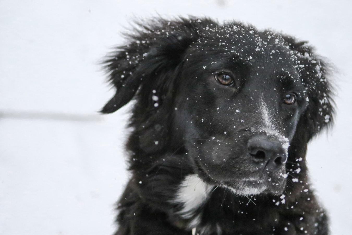 winter dog outdoors