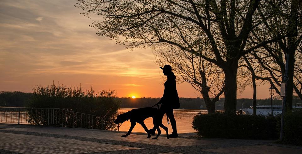 walking dog sunset